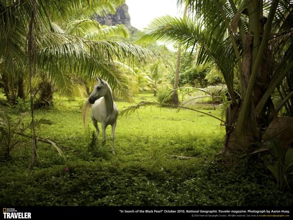 خلفية حصان أبيض